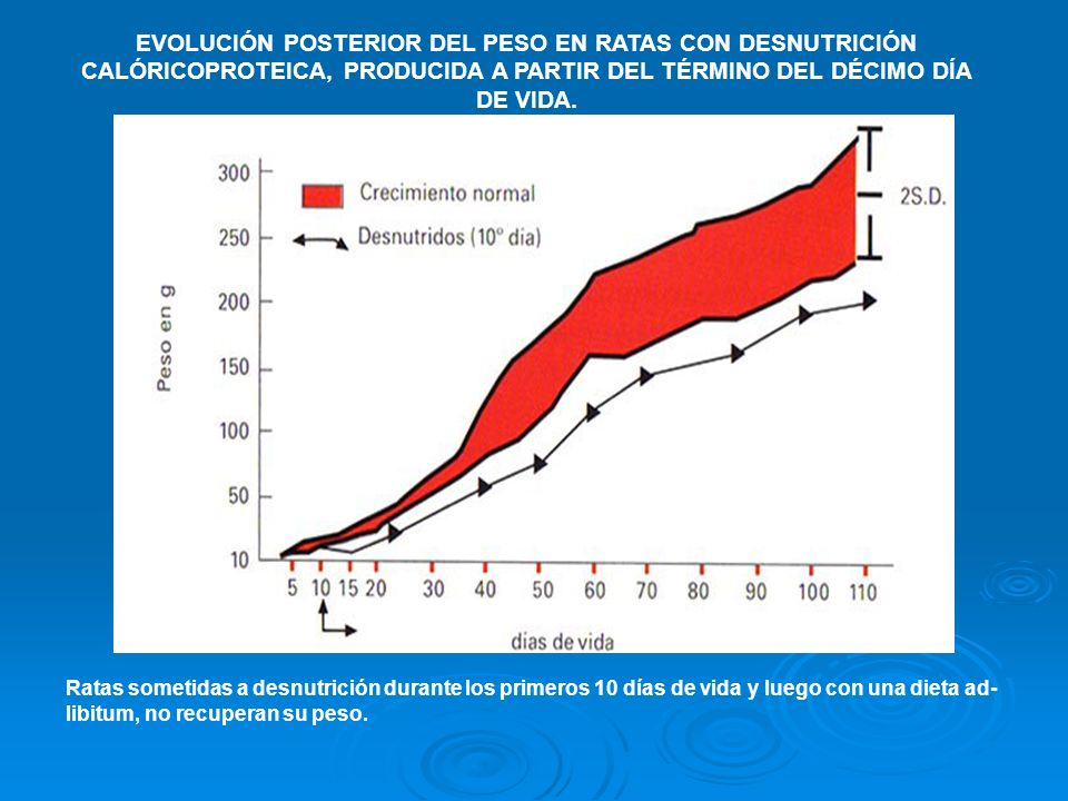 EVOLUCIÓN POSTERIOR DEL PESO EN RATAS CON DESNUTRICIÓN CALÓRICOPROTEICA, PRODUCIDA A PARTIR DEL TÉRMINO DEL DÉCIMO DÍA DE VIDA.