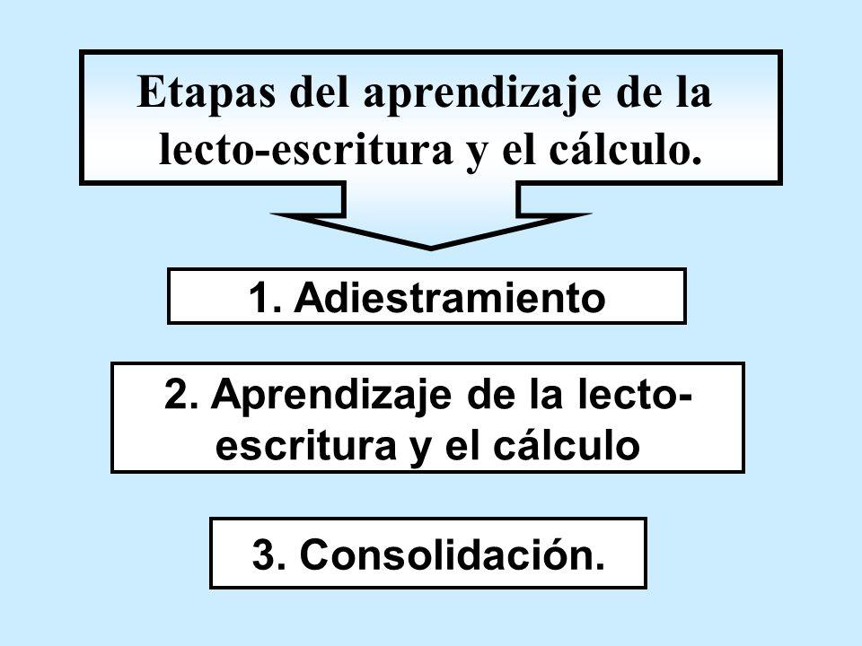 Etapas del aprendizaje de la lecto-escritura y el cálculo.