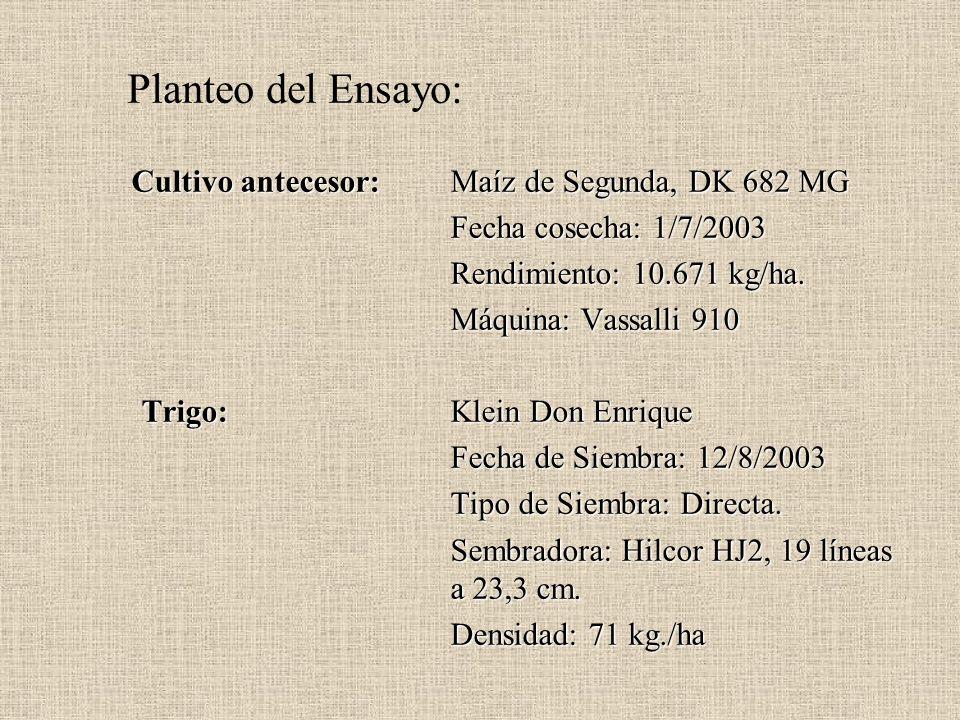 Planteo del Ensayo: Cultivo antecesor: Maíz de Segunda, DK 682 MG