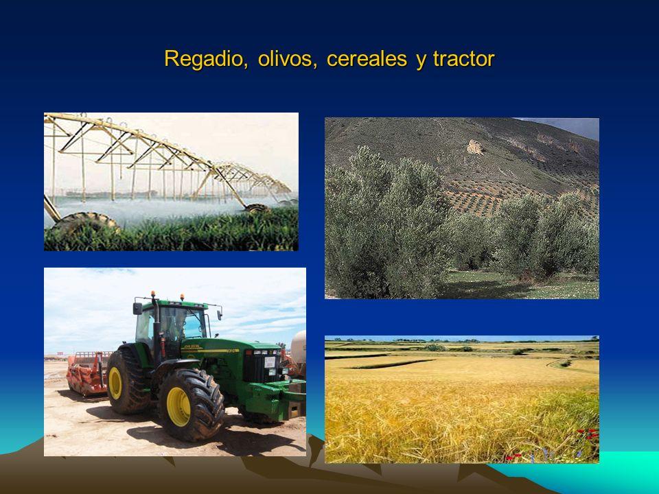 Regadio, olivos, cereales y tractor