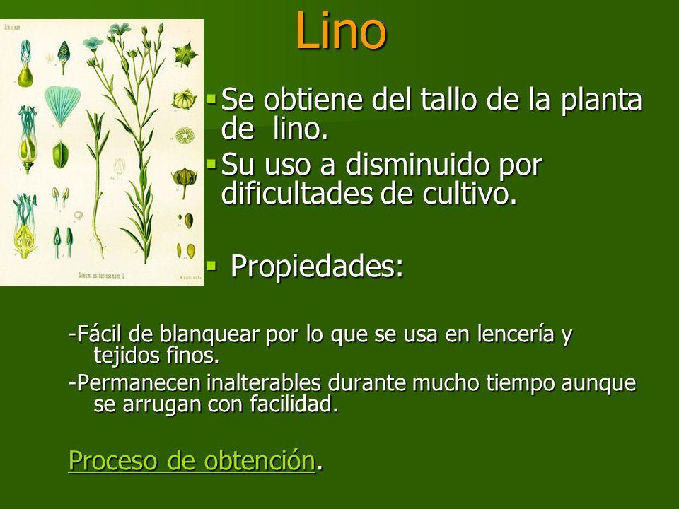 Lino Se obtiene del tallo de la planta de lino.