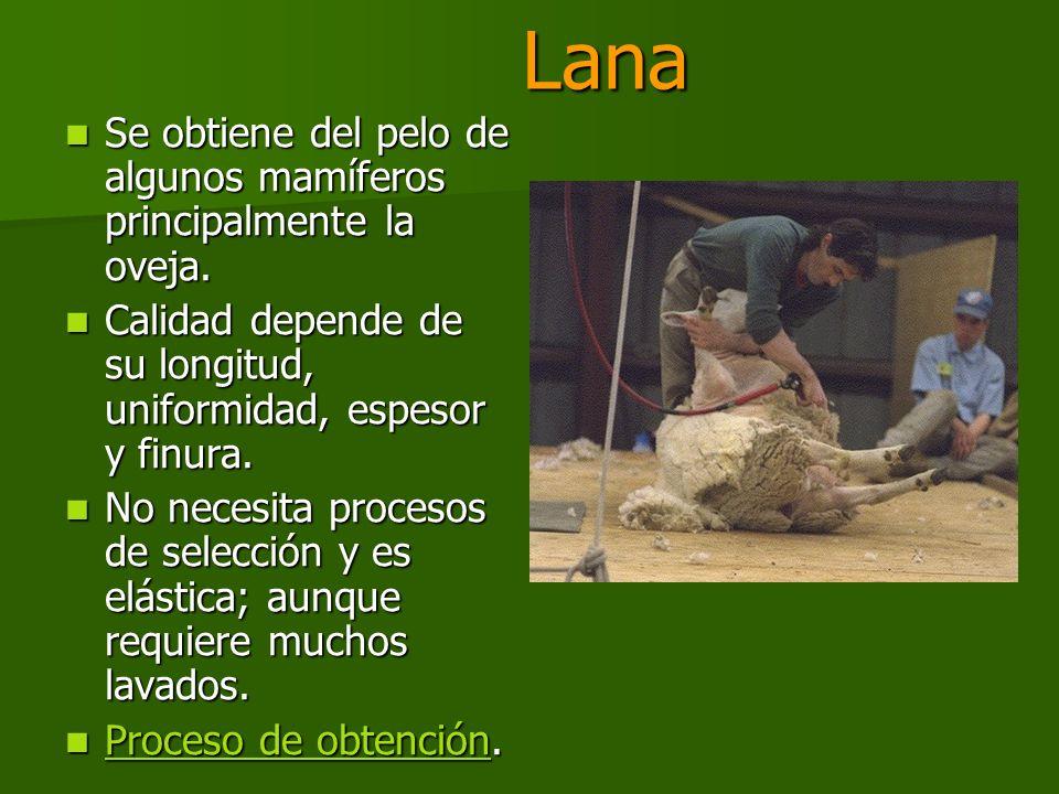 Lana Se obtiene del pelo de algunos mamíferos principalmente la oveja.