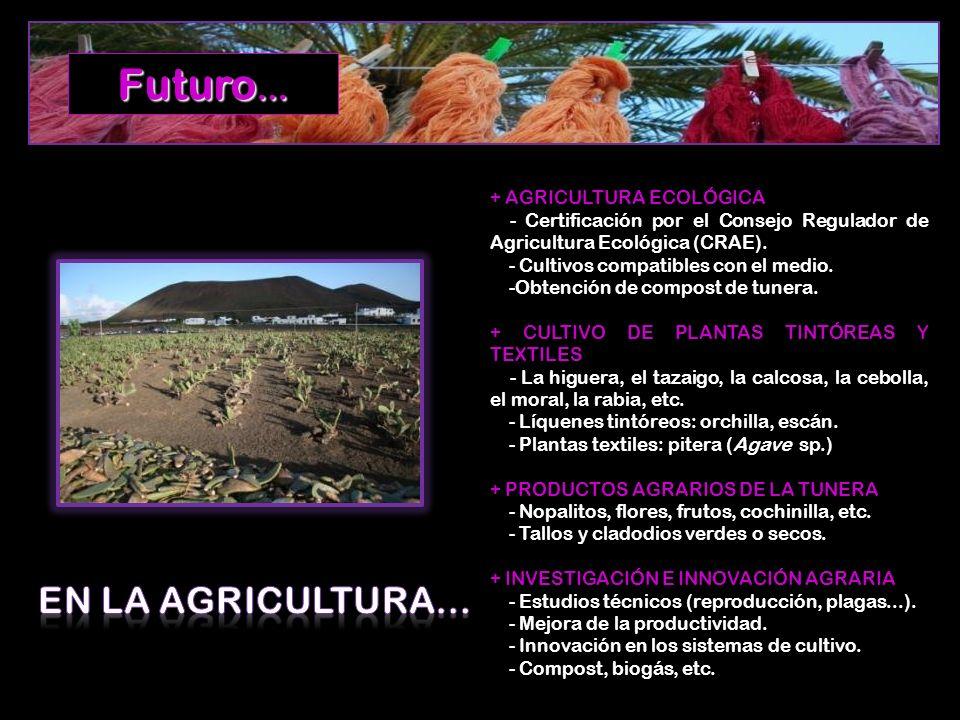 Futuro… EN LA AGRICULTURA… + AGRICULTURA ECOLÓGICA