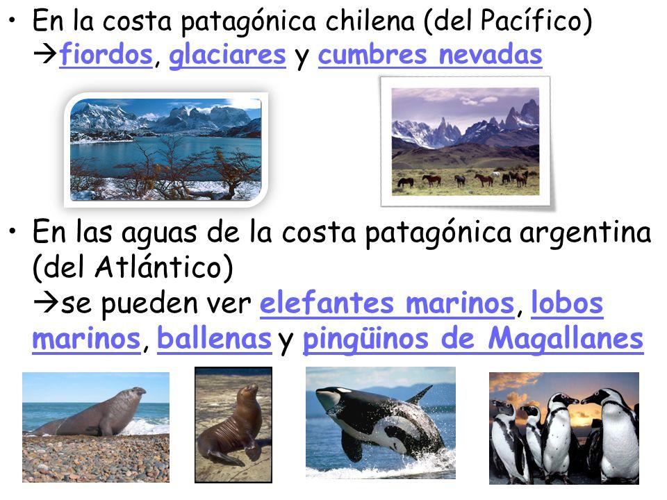 En la costa patagónica chilena (del Pacífico) fiordos, glaciares y cumbres nevadas