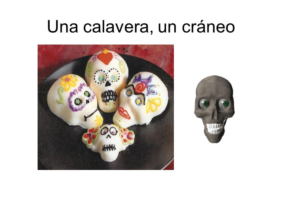 Una calavera, un cráneo