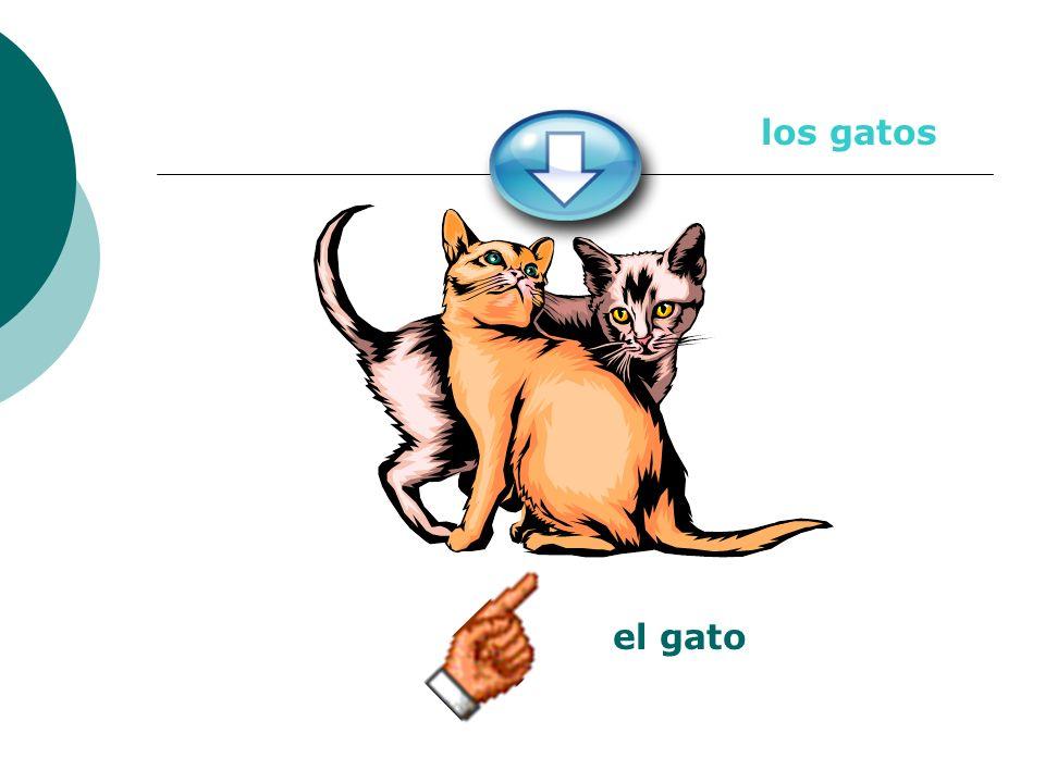los gatos el gato