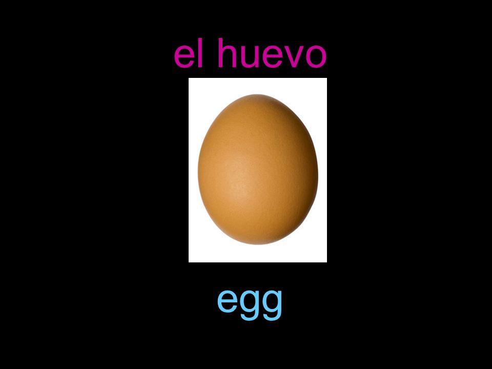 el huevo egg