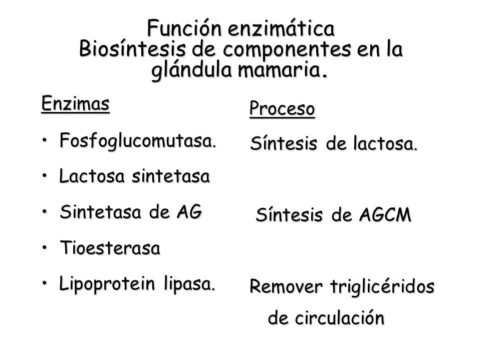 Función enzimática Biosíntesis de componentes en la glándula mamaria.