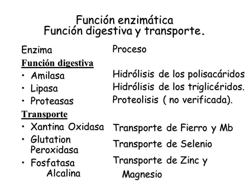 Función enzimática Función digestiva y transporte.