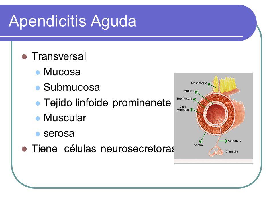 Apendicitis Aguda Transversal Mucosa Submucosa