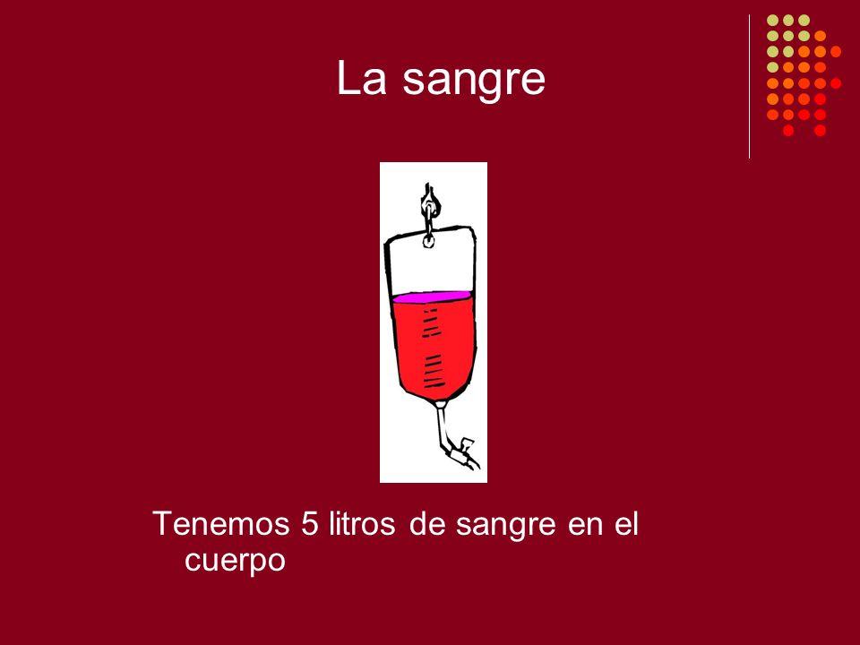 La sangre Tenemos 5 litros de sangre en el cuerpo