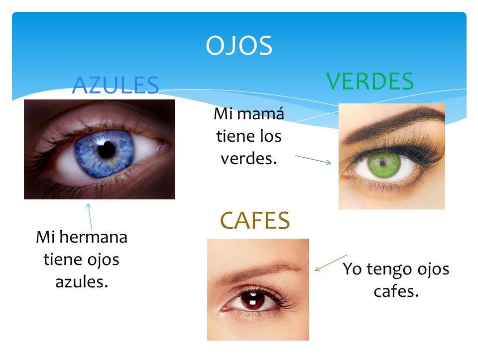 OJOS VERDES AZULES CAFES Mi mamá tiene los verdes.