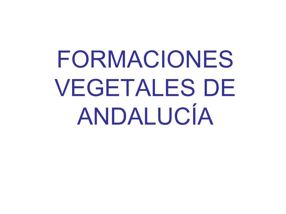 FORMACIONES VEGETALES DE ANDALUCÍA