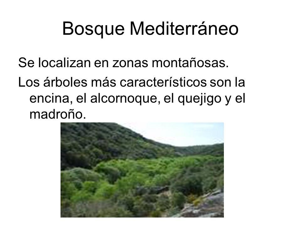 Bosque Mediterráneo Se localizan en zonas montañosas.