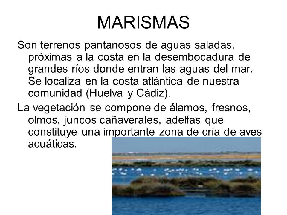 MARISMAS