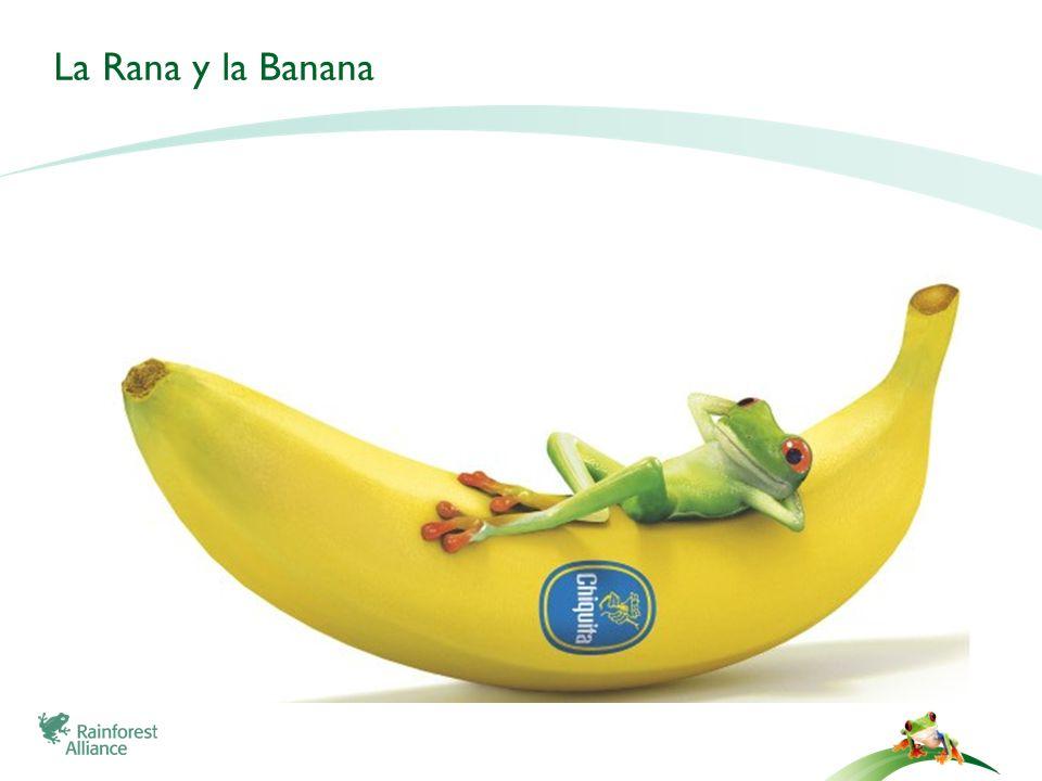 La Rana y la Banana 11