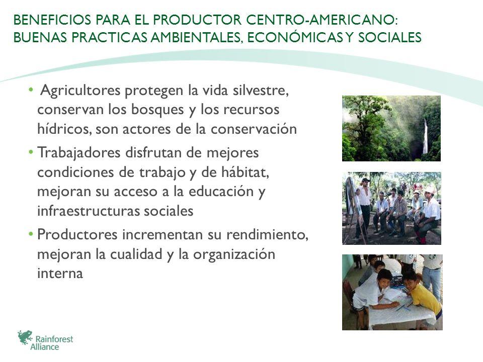 BENEFICIOS PARA EL PRODUCTOR CENTRO-AMERICANO: BUENAS PRACTICAS AMBIENTALES, ECONÓMICAS Y SOCIALES