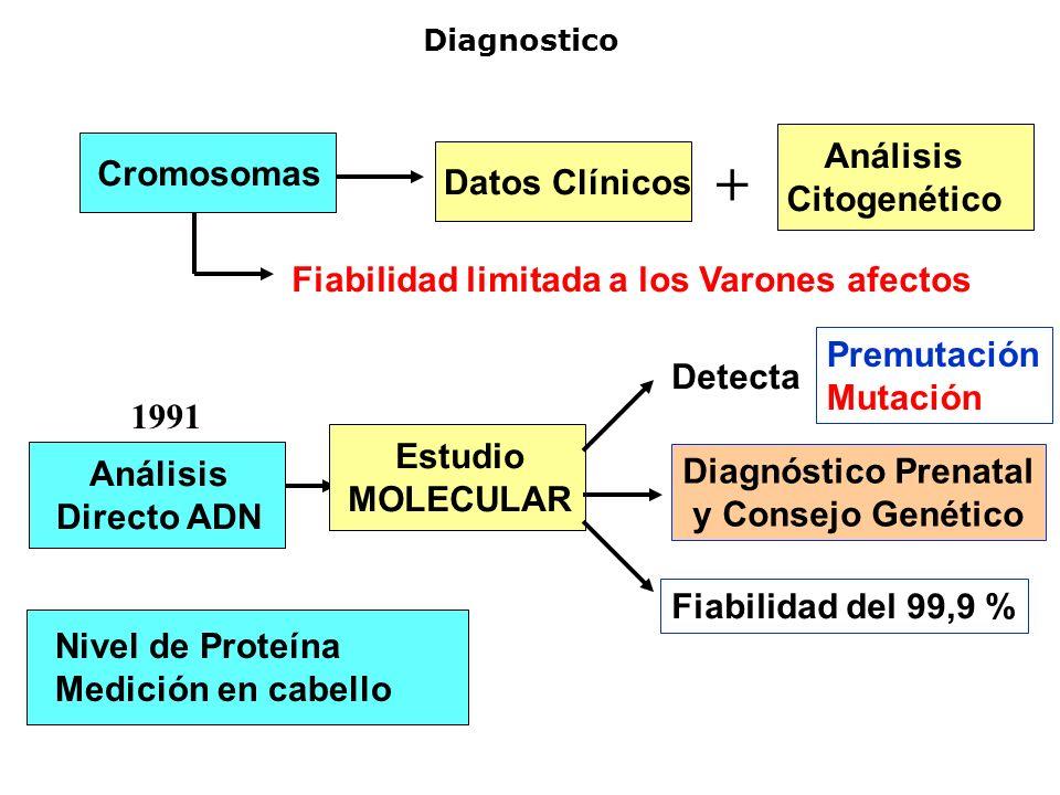 + Análisis Cromosomas Citogenético Datos Clínicos
