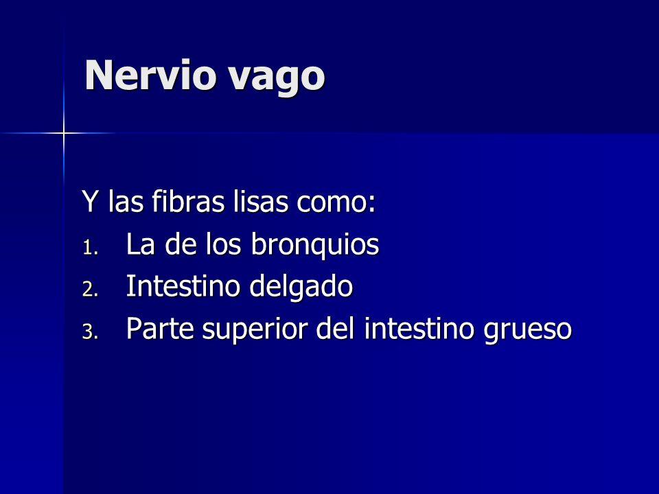 Nervio vago Y las fibras lisas como: La de los bronquios