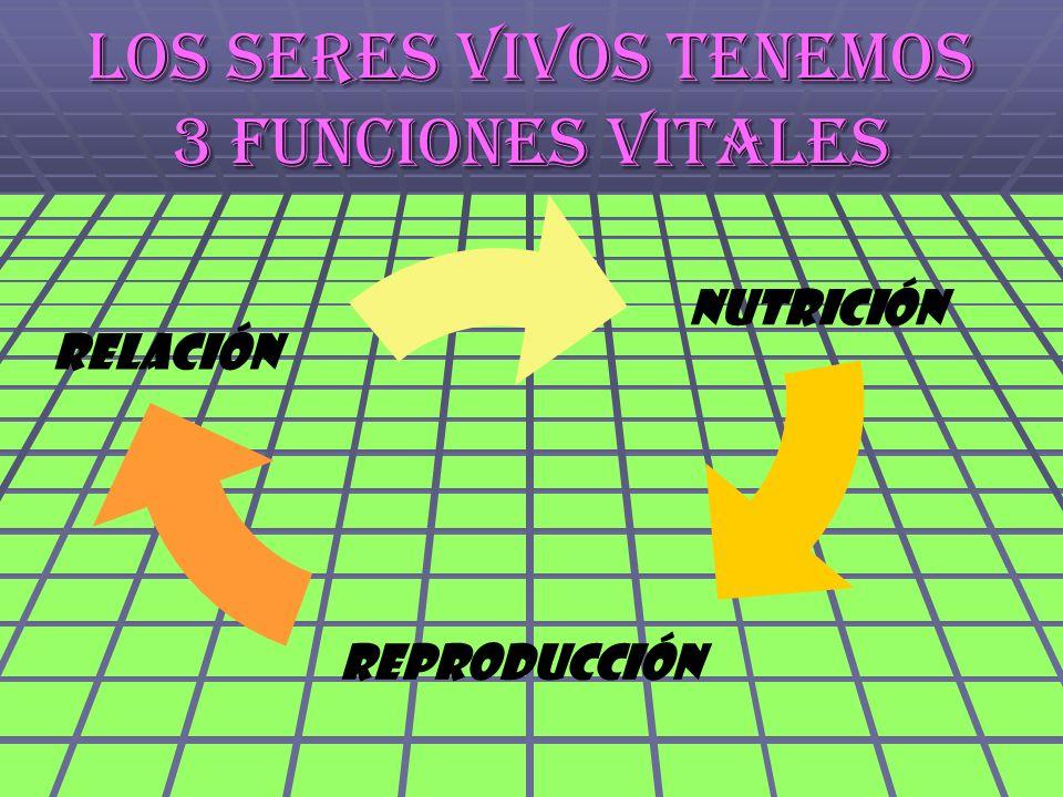 Los seres vivos tenemos 3 funciones vitales