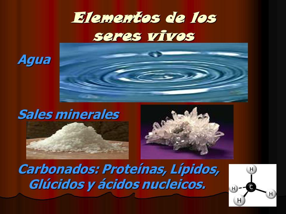 Elementos de los seres vivos
