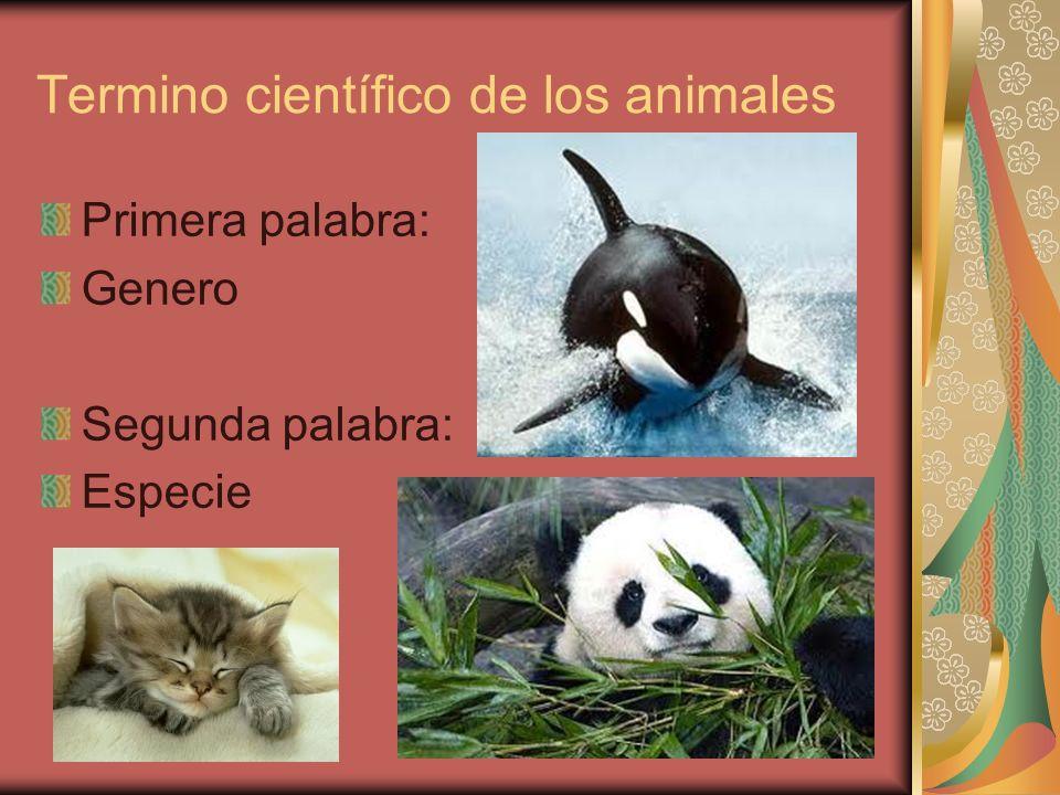 Termino científico de los animales