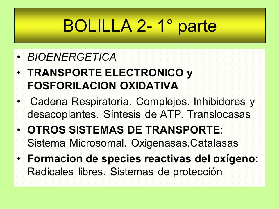 BOLILLA 2- 1° parte BIOENERGETICA