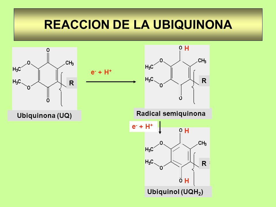 REACCION DE LA UBIQUINONA