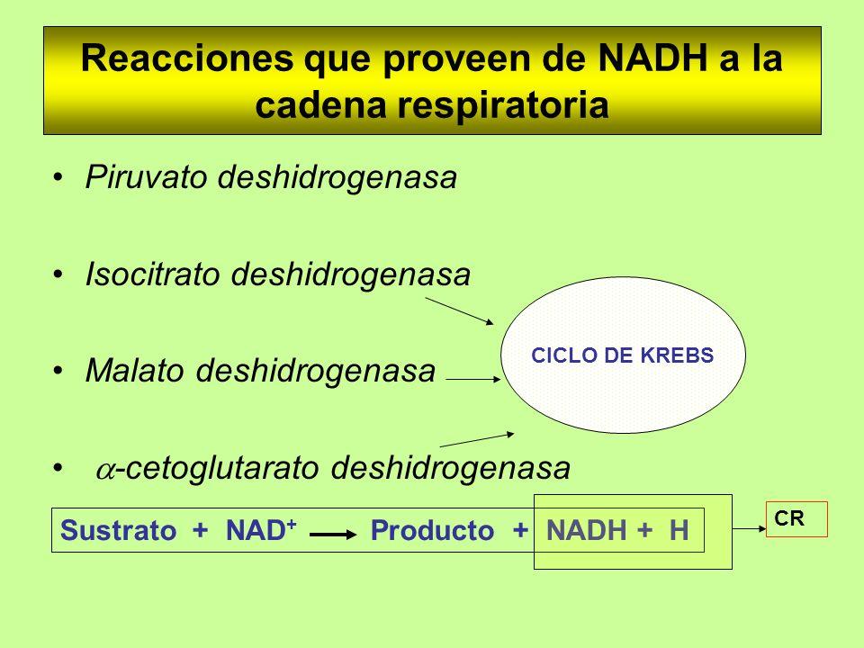 Reacciones que proveen de NADH a la cadena respiratoria