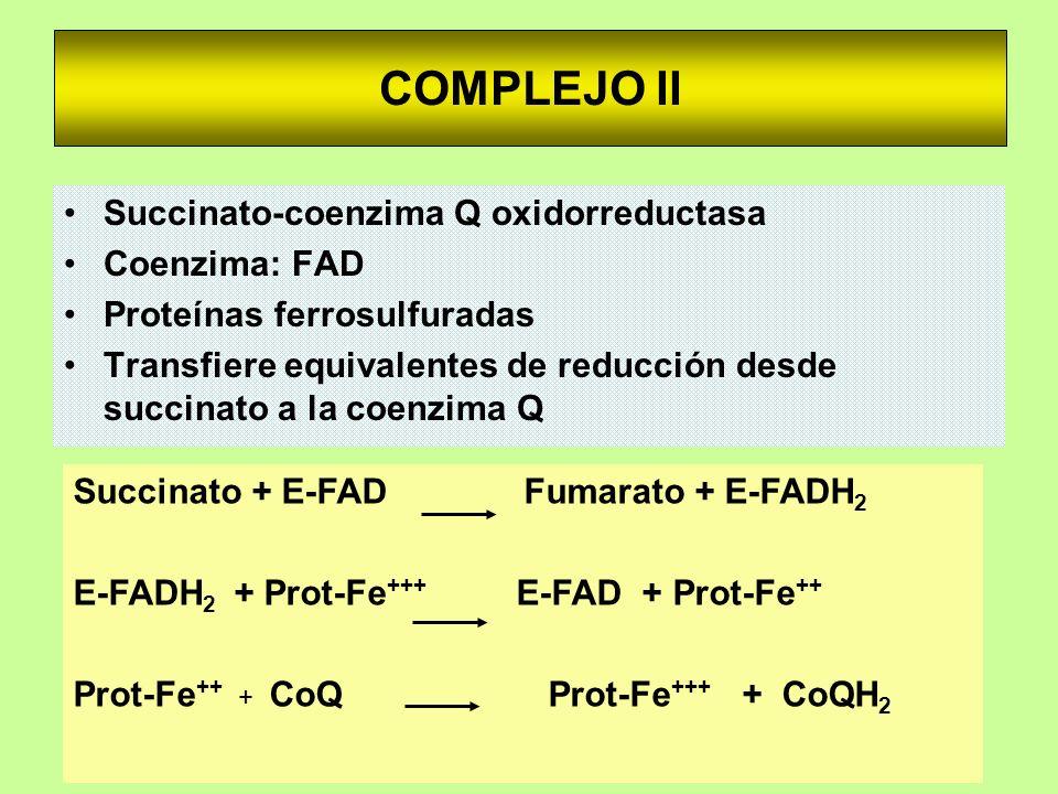COMPLEJO II Succinato-coenzima Q oxidorreductasa Coenzima: FAD