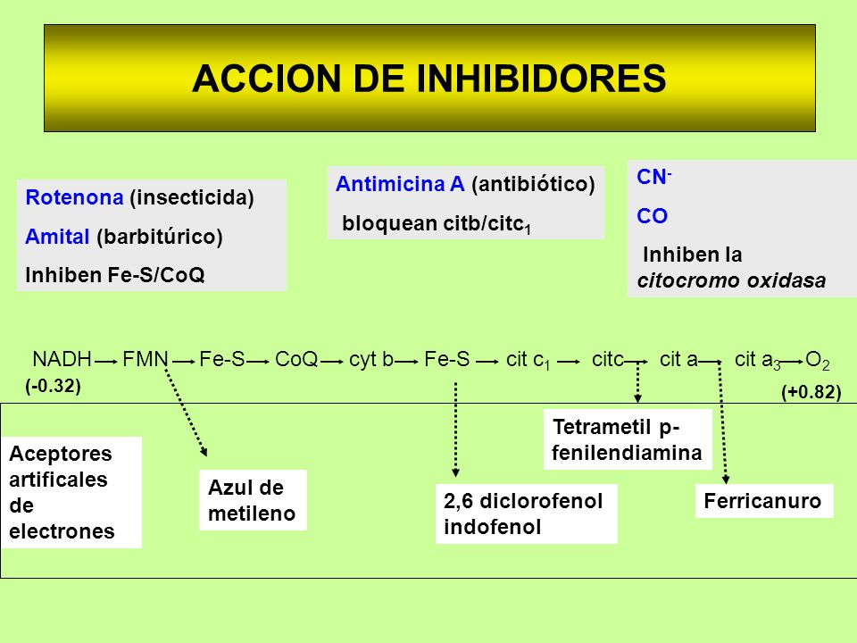 ACCION DE INHIBIDORES CN- CO Inhiben la citocromo oxidasa