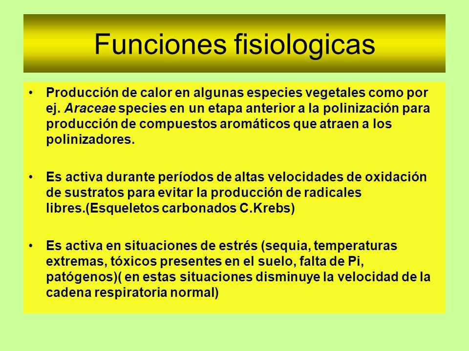 Funciones fisiologicas