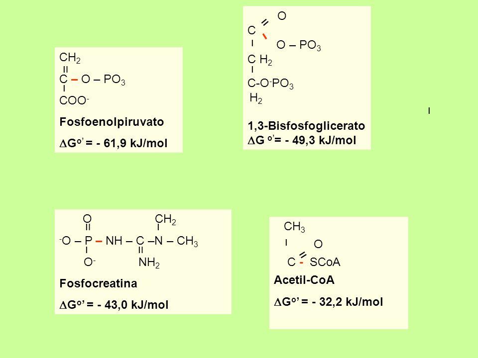 OC. O – PO3. C H2. C-O-PO3. H2. 1,3-Bisfosfoglicerato. DG o'= - 49,3 kJ/mol. װ. ו. CH2. C – O – PO3.