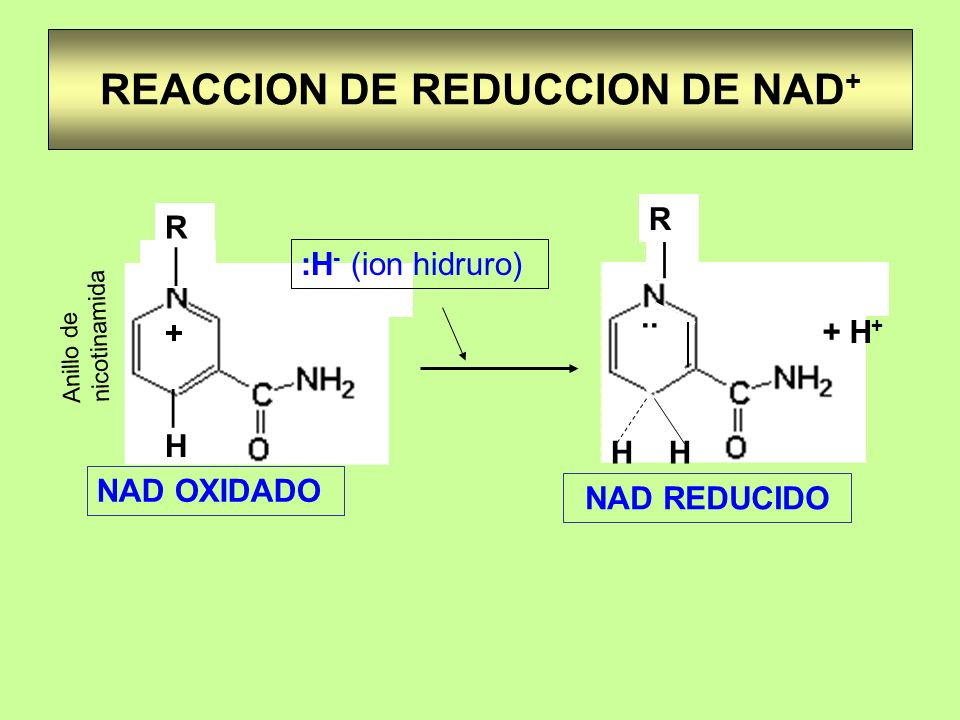 REACCION DE REDUCCION DE NAD+