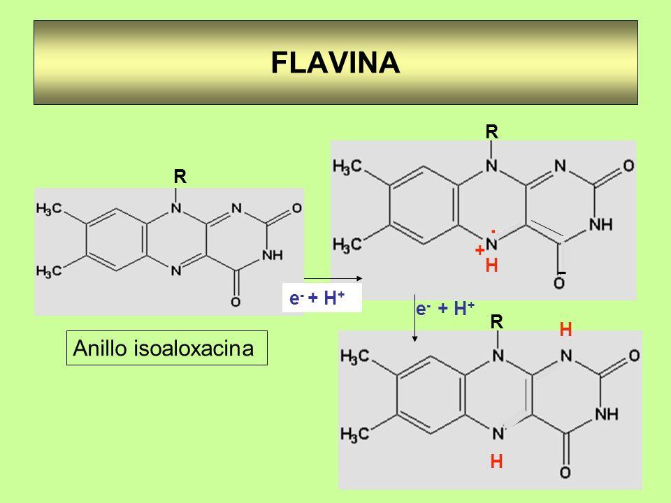 FLAVINA R . H + - Anillo isoaloxacina R e- + H+ e- + H+ R H
