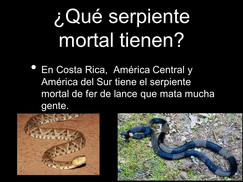 ¿Qué serpiente mortal tienen