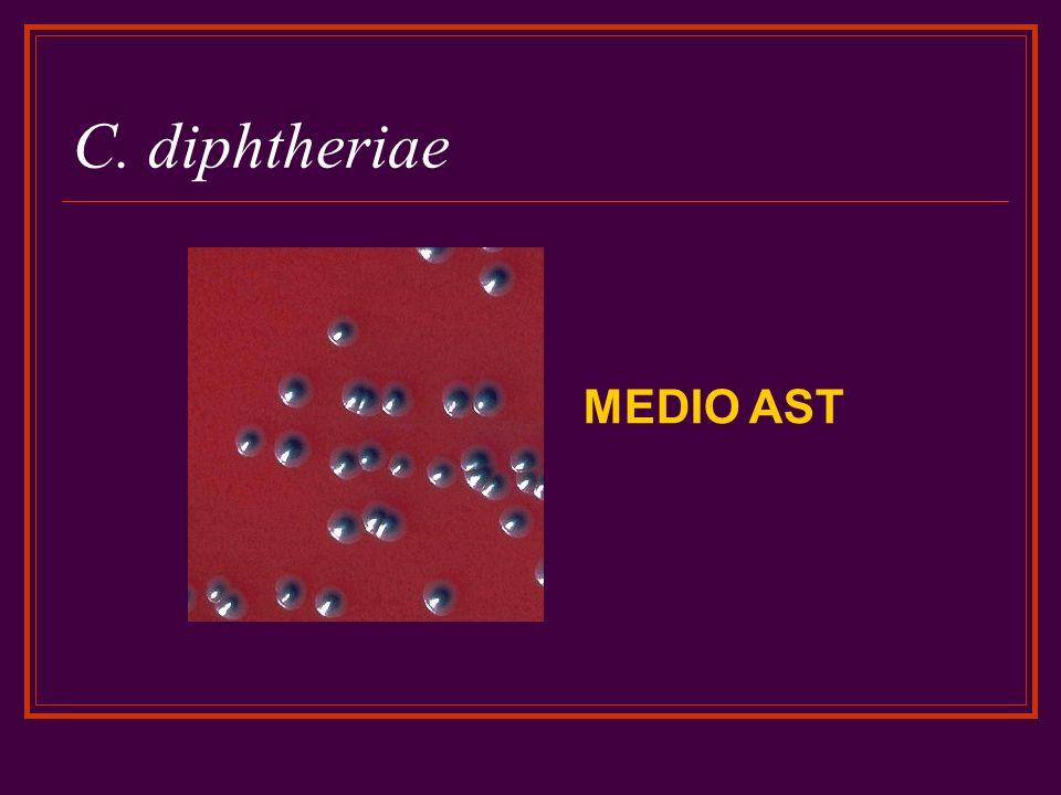 C. diphtheriae MEDIO AST