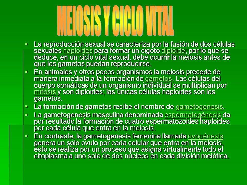 MEIOSIS Y CICLO VITAL
