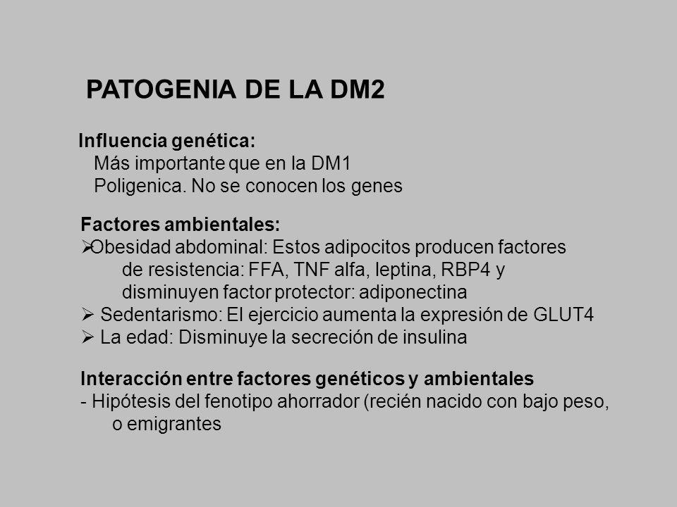 PATOGENIA DE LA DM2 Influencia genética: Más importante que en la DM1