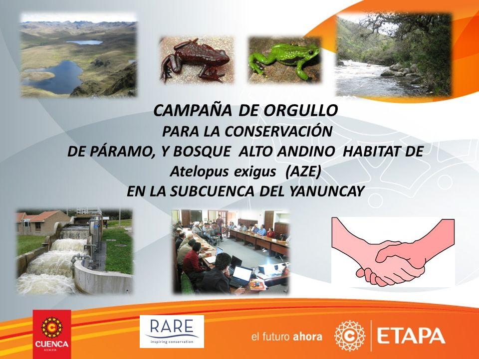 CAMPAÑA DE ORGULLO PARA LA CONSERVACIÓN DE PÁRAMO, Y BOSQUE ALTO ANDINO HABITAT DE Atelopus exigus (AZE) EN LA SUBCUENCA DEL YANUNCAY