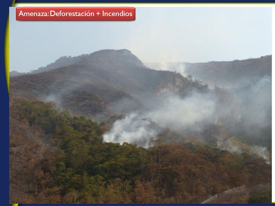 Amenaza: Deforestación + Incendios