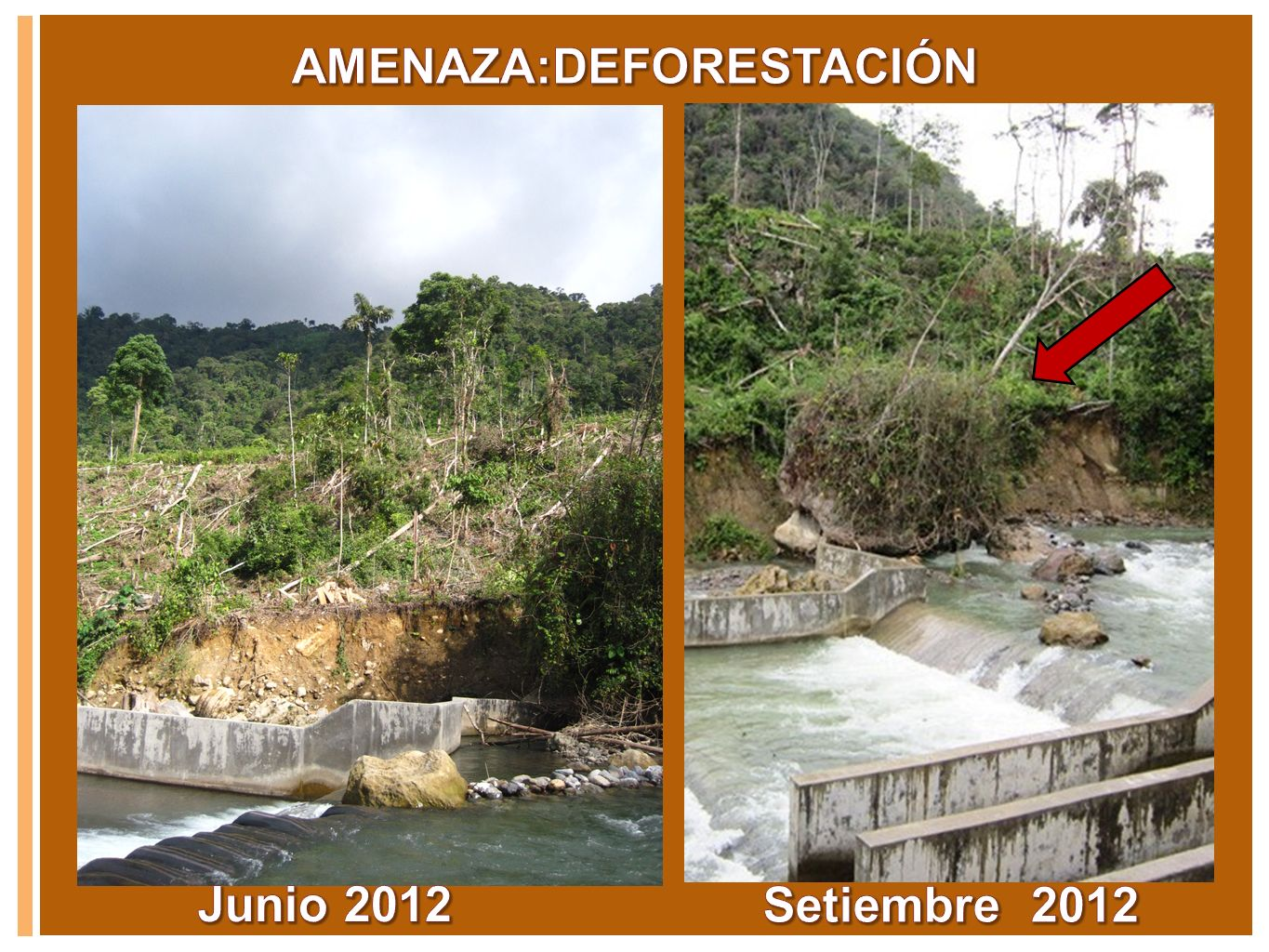 AMENAZA:DEFORESTACIÓN