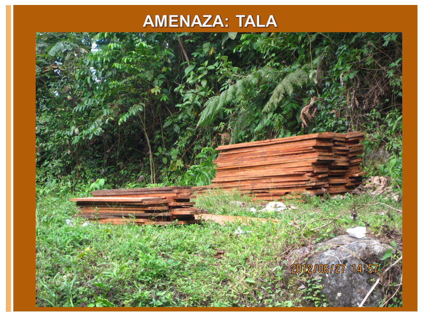 AMENAZA: TALA Text only Slide with Graphic (orange)