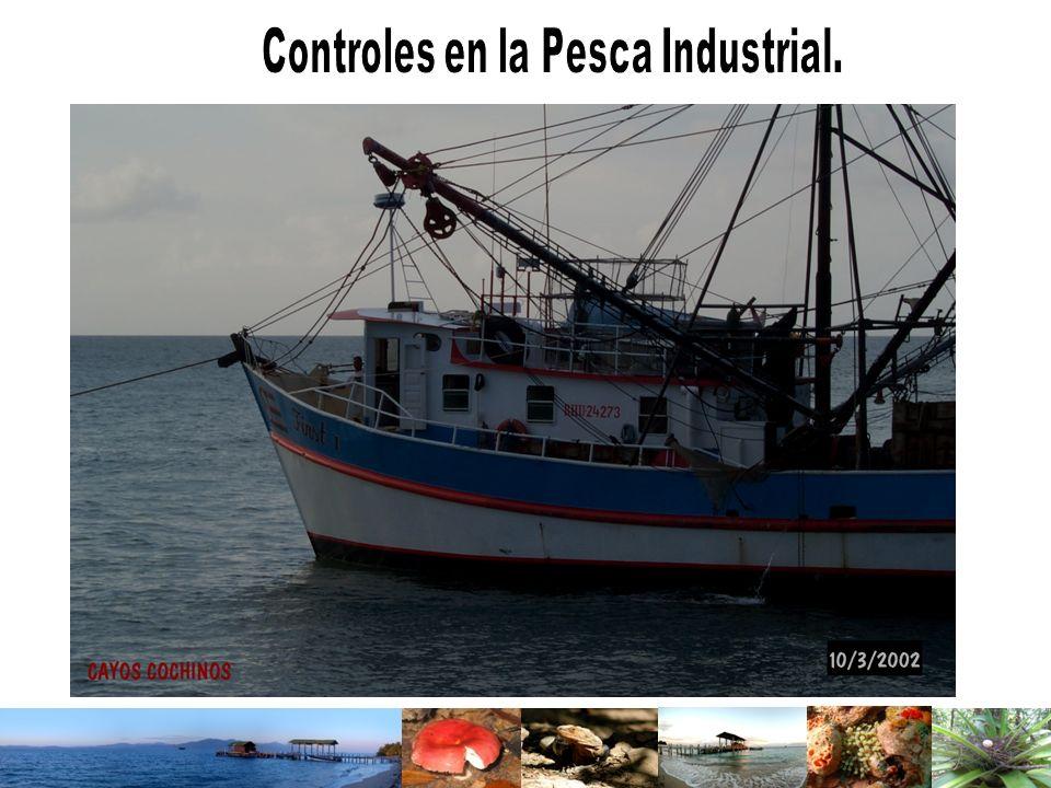 Controles en la Pesca Industrial.