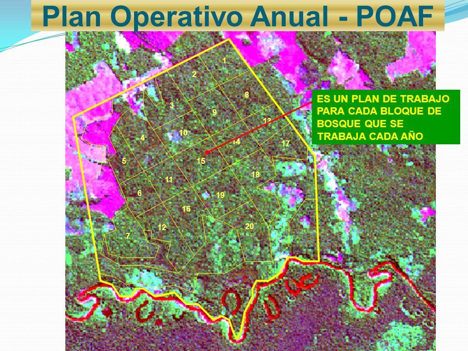 Plan Operativo Anual - POAF