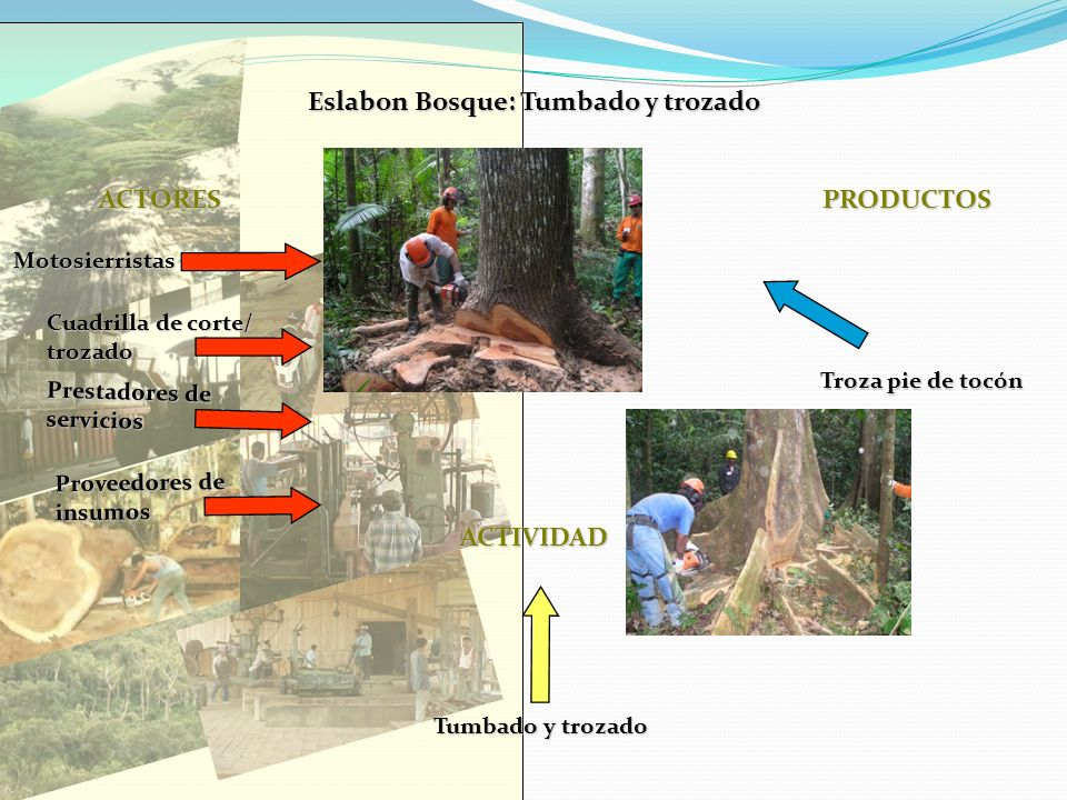 Eslabon Bosque: Tumbado y trozado