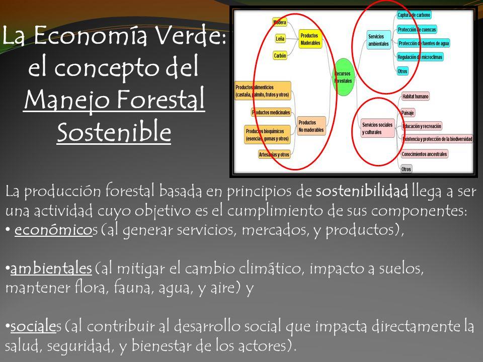 La Economía Verde: el concepto del Manejo Forestal Sostenible