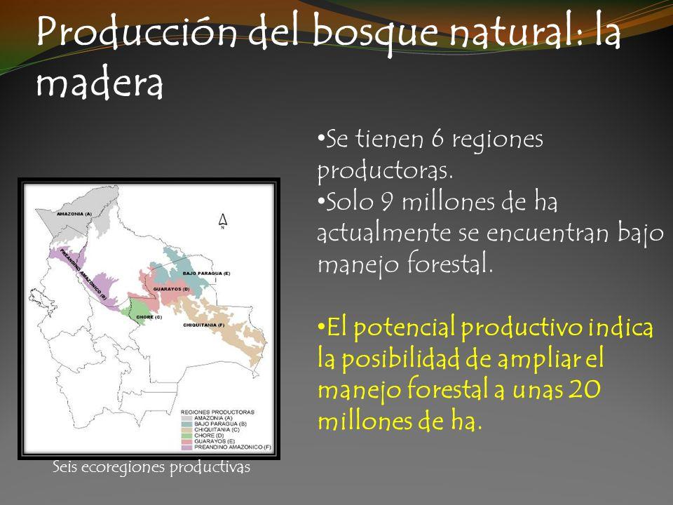 Producción del bosque natural: la madera