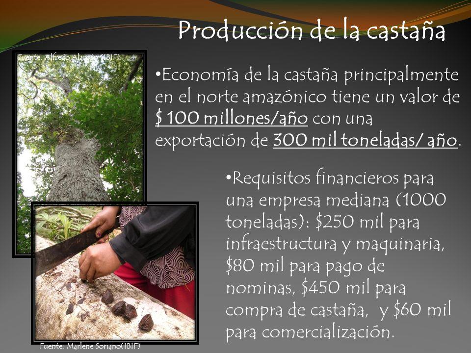Producción de la castaña