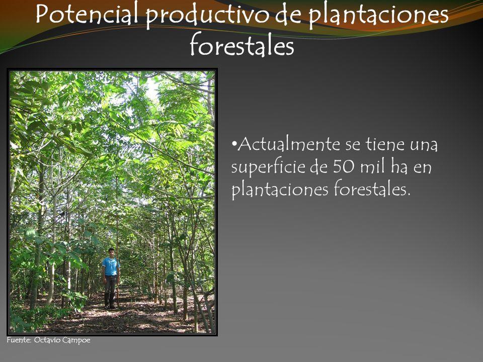Potencial productivo de plantaciones forestales